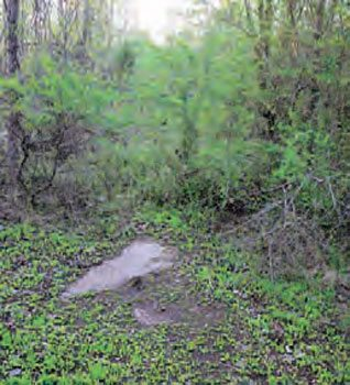When Harriman Drag Strip closed in 1972, it wasn't kept clean, so trees took over the property and completely hid the remains of the track. Now that it has been sitting vacant for more than forty years, small portions of pavement are all that remain.